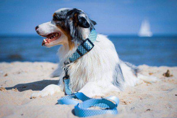 Obroża dla psa Aqua Dog
