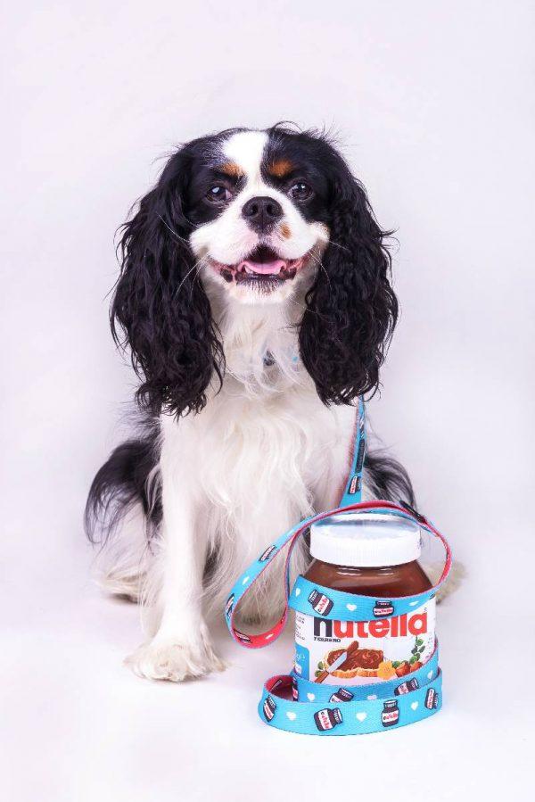 Obroża dla psa Bicolor Cutella