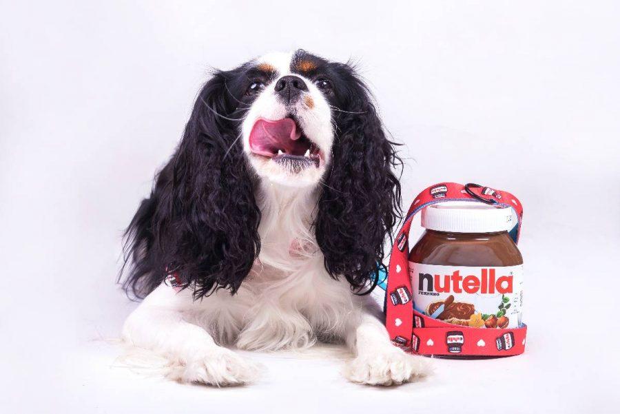 Obroża dla psa Red Cutella