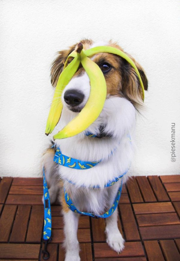 Smycz dla psa Crazy Bananas
