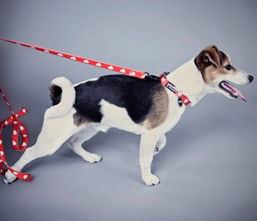 Smycz dla psa White Hearts