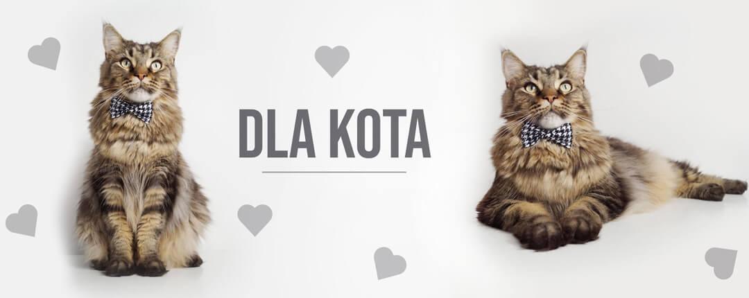 obroże i akcesoria dla kotów